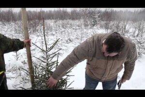 Москвичи выбирают себе елки в лесничествах