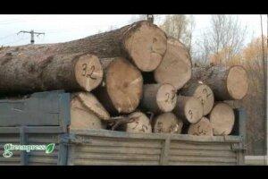 Закон об обороте круглых лесоматериалов